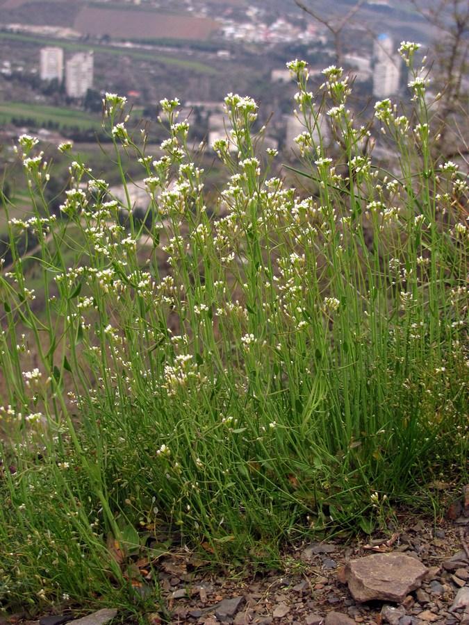 70 интересных фактов о растениях
