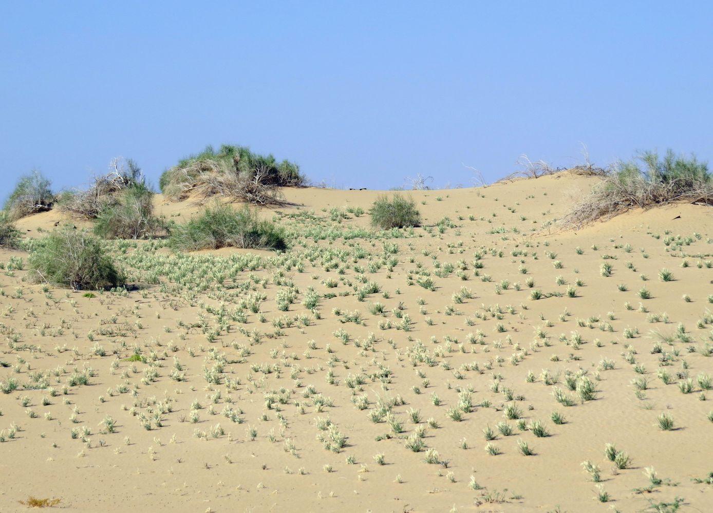 песчаные гряды картинка кулинарном