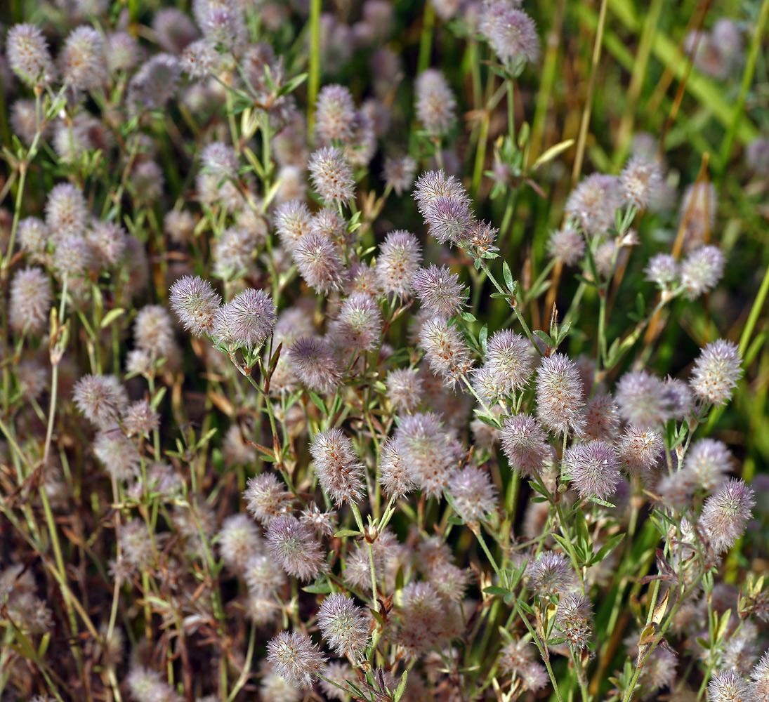 лечебные травы фото с названиями подмосковья сопровождаются