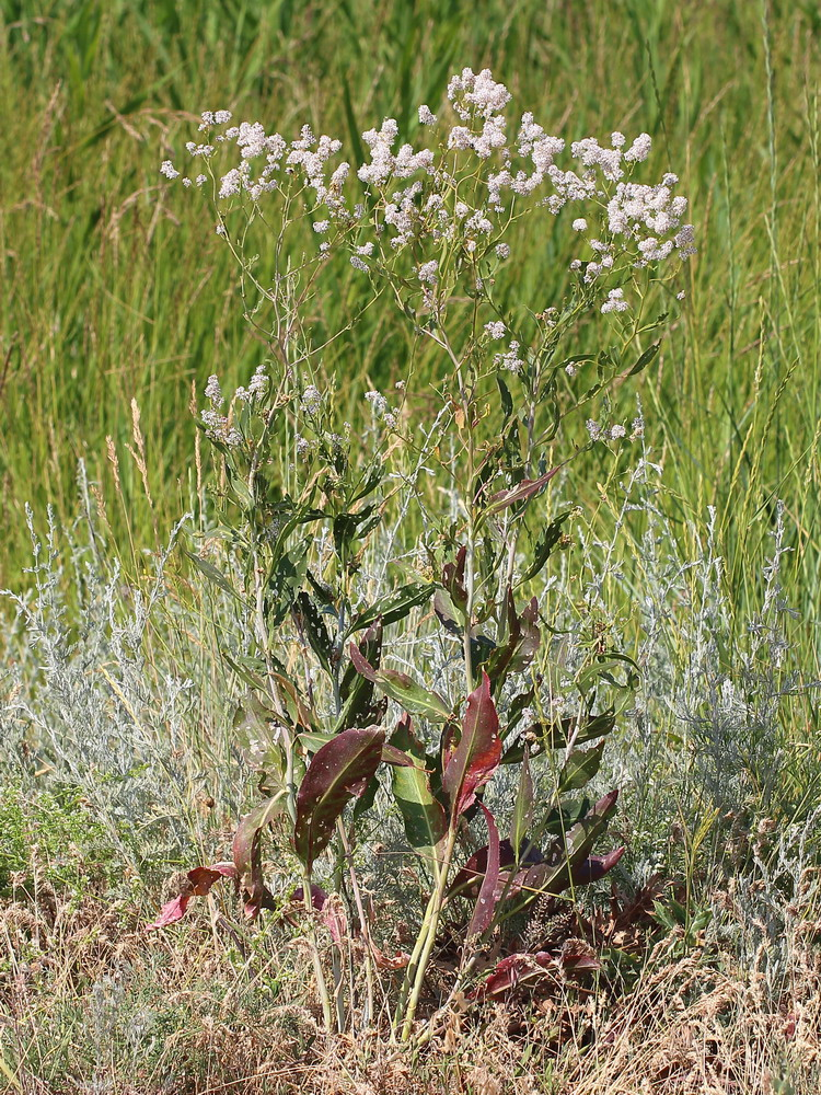 Субтропические растения фото