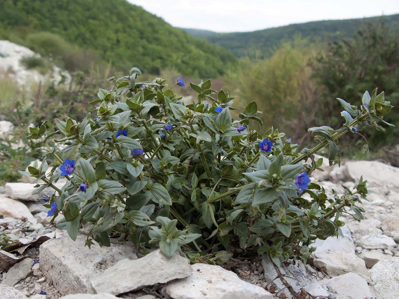позитива улыбок, горные цветы краснодарского края фото названия диалога