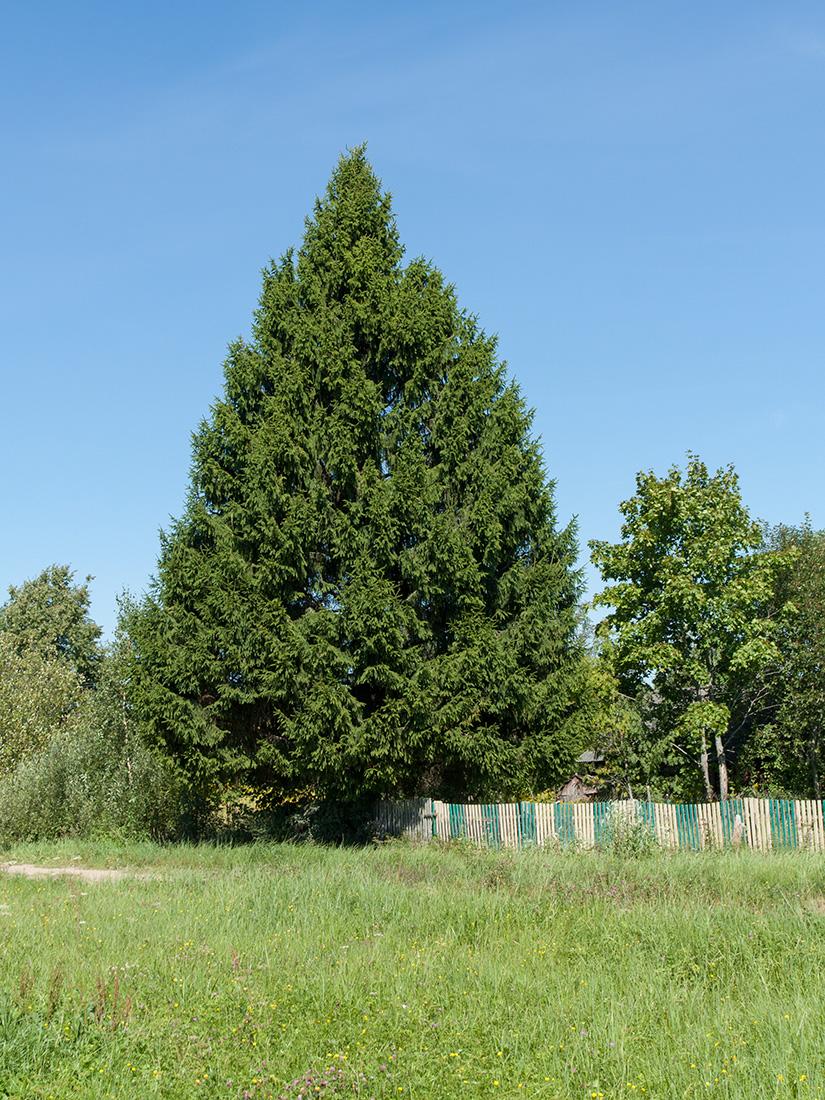 http://www.plantarium.ru/dat/plants/8/845/597845_8e93b262.jpg