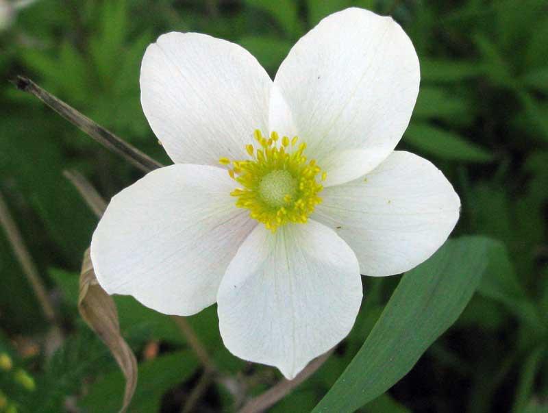 цветы красноярского края фото и названия подышать влажным