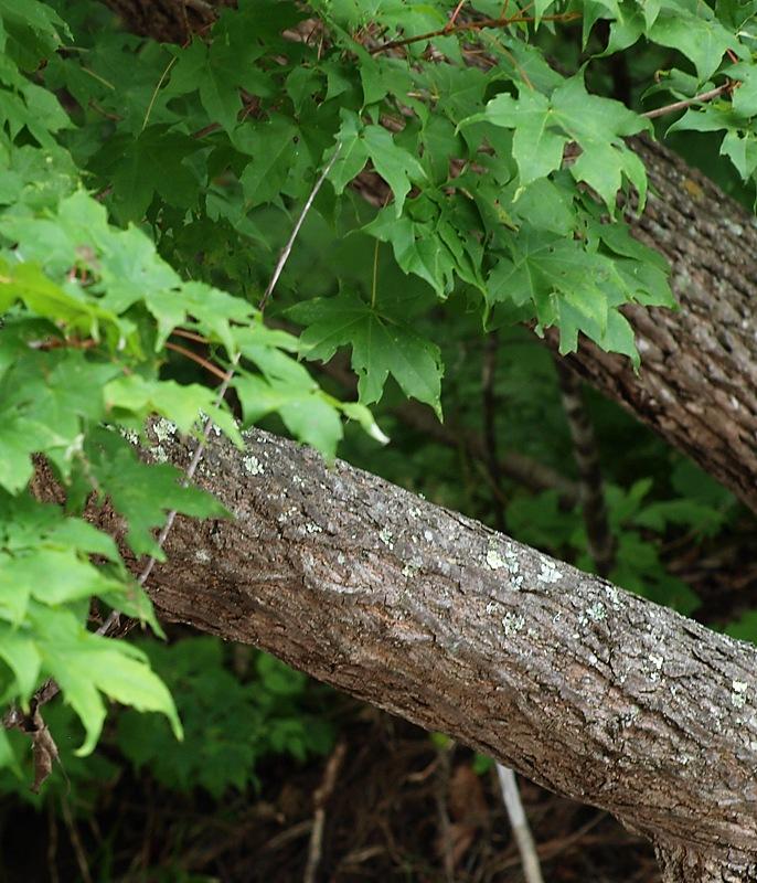ней деревья приморского края фото названия конструкция позволяет