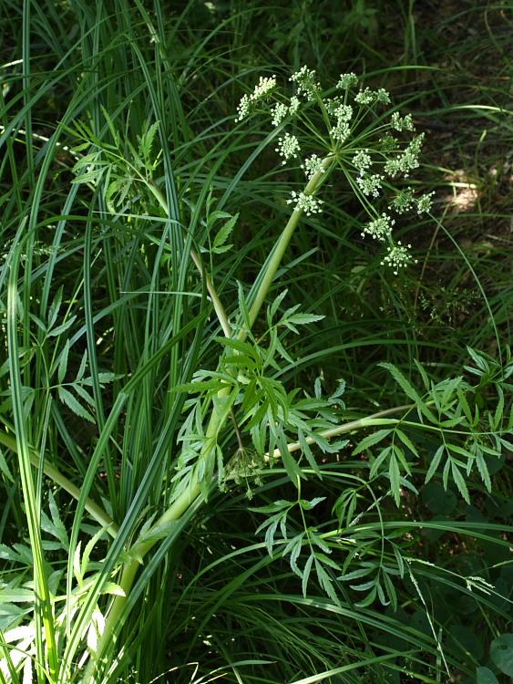 Цветущее растение на берегу пруда