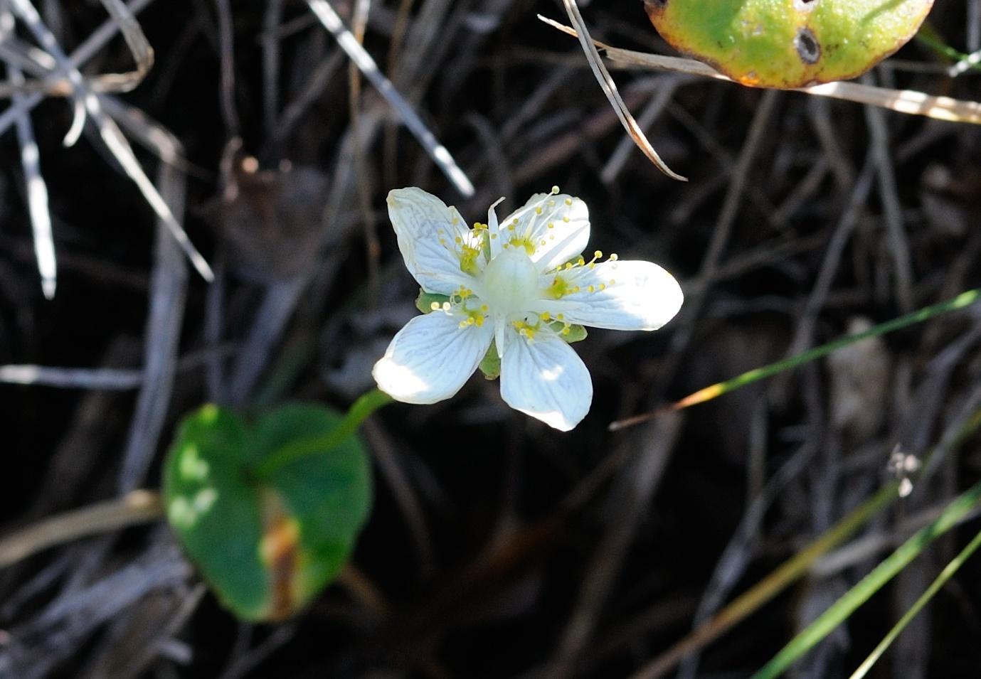 Природа фотографии цветковые растения водились
