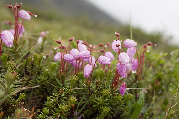 Растения как приправы зонтичные фото