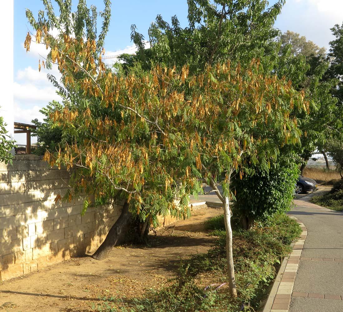 растения и деревья произрастающие на юге  статьи  портал