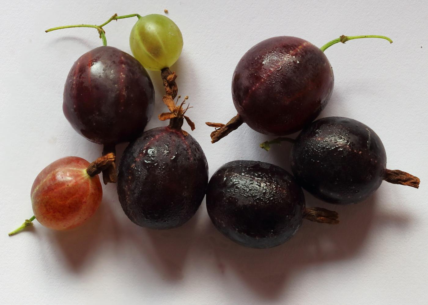Йошта (Ribes × nidigrolaria)