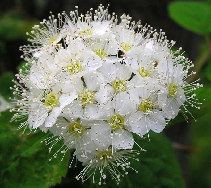 фото цветов дальнего востока с названиями