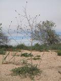 http://www.plantarium.ru/dat/plants/9/974/445974.jpg
