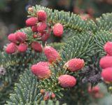 http://www.plantarium.ru/dat/plants/9/974/579974.jpg