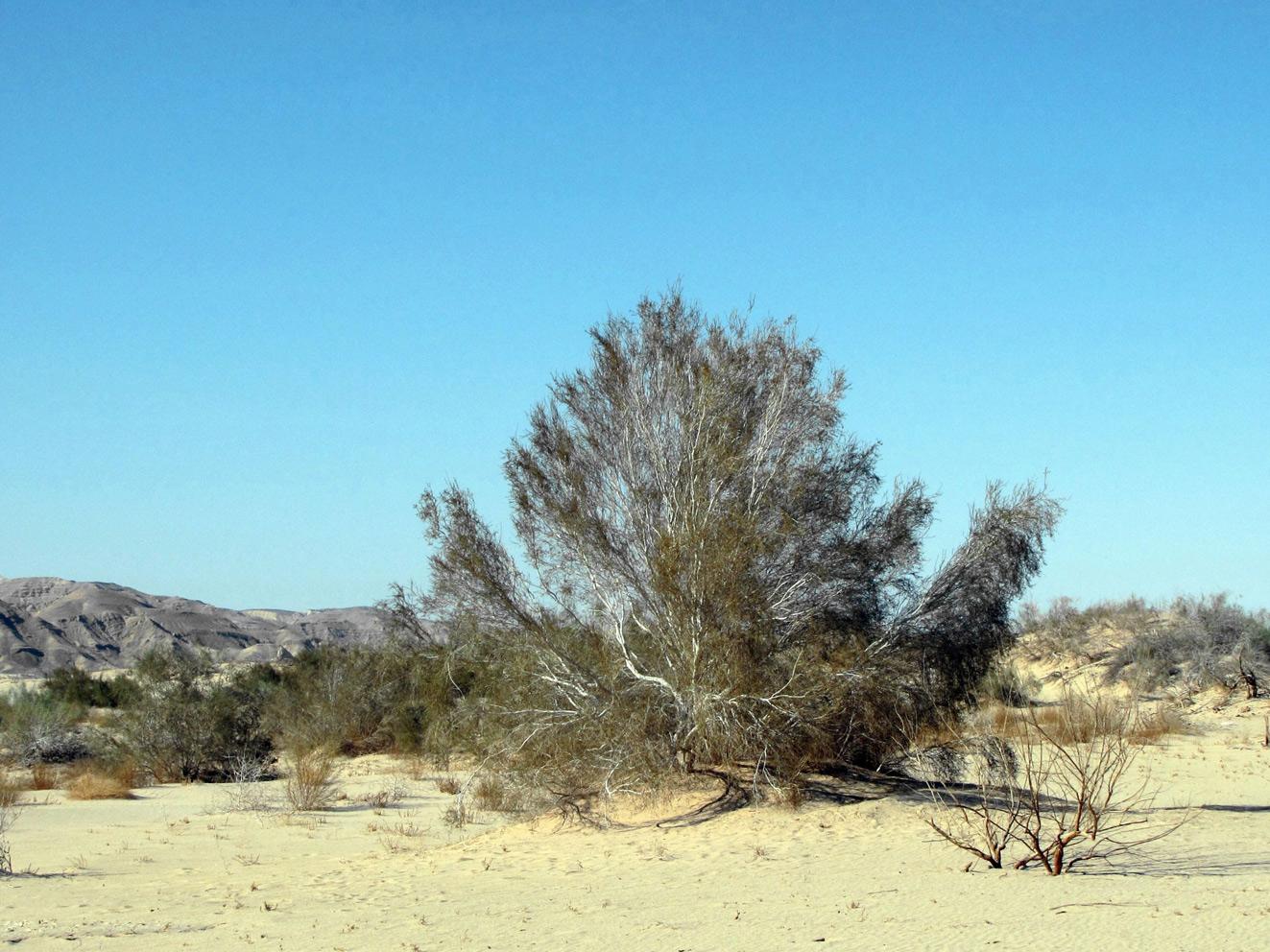 Человек в пустыне рисунки