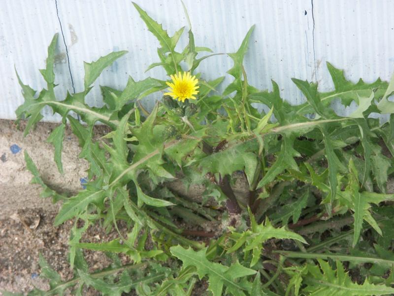 Цветущее растение санкт петербург 26