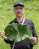 http://www.plantarium.ru/dat/portraits/138.small.jpg