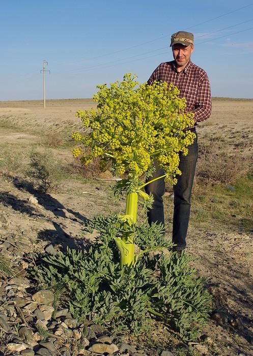 http://www.plantarium.ru/dat/portraits/156.jpg?74213ebe